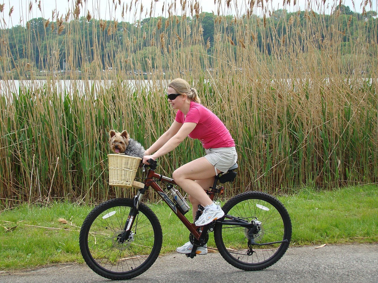 yorkie and a girl on a bike