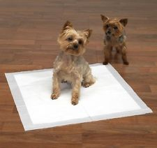 Yorkie on a puppy pad