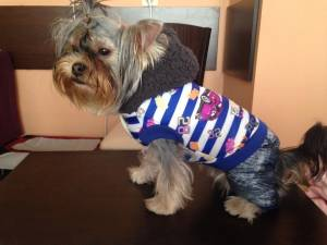 Yorkie clothes for boys