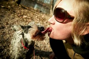 Yorkshire terrier licking reasons