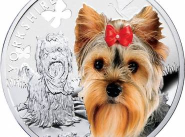 How Much Does A Yorkie Puppy Cost? Yorkshire Terrier Price Ranges