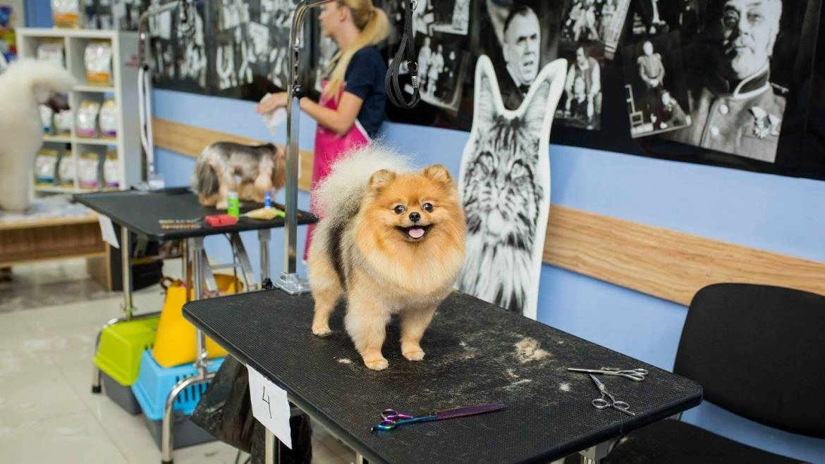 How To Choose A Dog Grooming Table [Recommended By Pro Groomers]