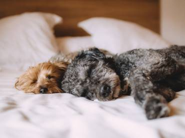 Melatonin For Dogs – Benefits, Dosage and Side Effects
