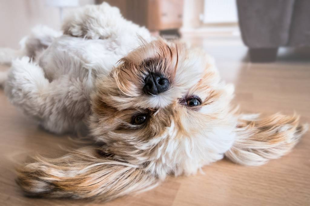 Melatonin Effects for dogs
