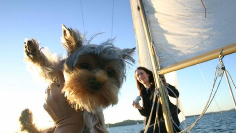 What You Should Know About Traveling with Your Yorkie